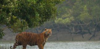 कान्हा नेशनल पार्क - Kanha National Park