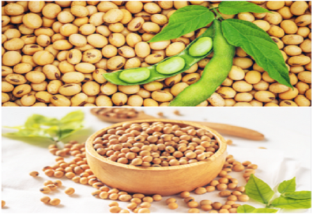 soybean benefits